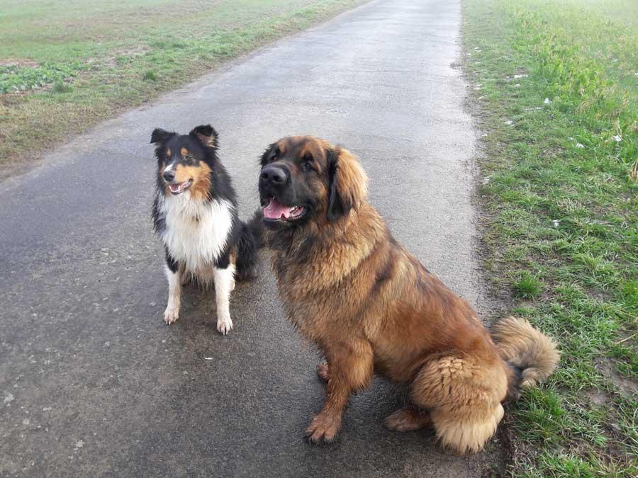 Hundeschule Partner mit 4 Pfoten